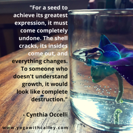 Cynthia Occelli seed quote